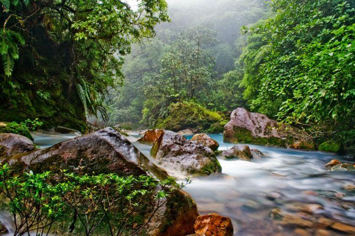 CostaRicaJungle